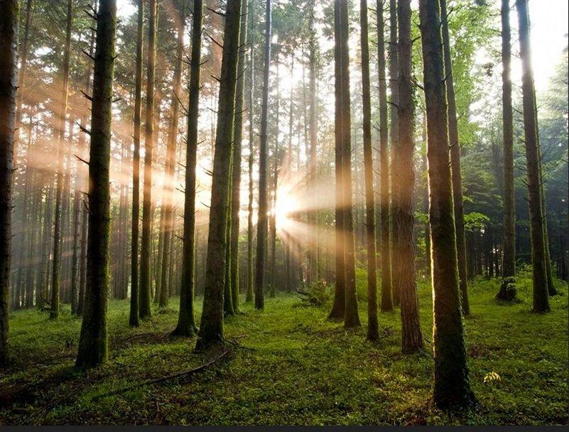 bosco-eden-natura-tradizione