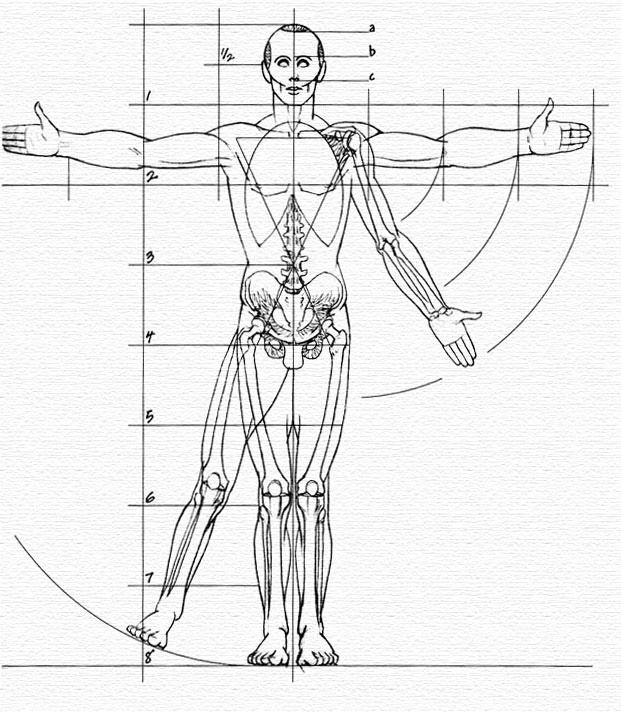 uomo-anatomia-proporzioni-armonia-geometria-organismo